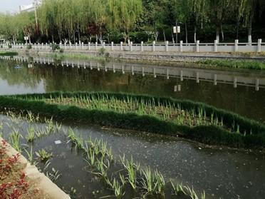 攀枝花水体环境修复浮田湿地正大森立