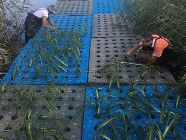 德阳湖泊水生态治理新型湿地材料生产