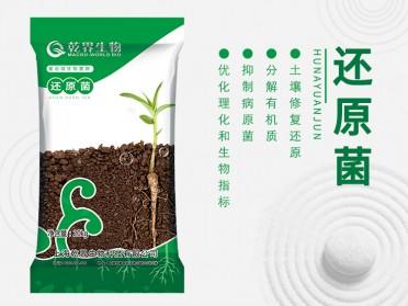乾界生物还原菌 土壤修复 重茬连作障碍