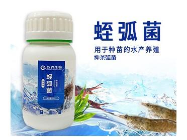 乾界生物蛭弧菌 治疗南美白对虾因为弧菌感染的病害